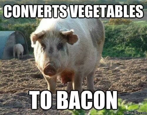photo of pig that says converts vegetables to bacon