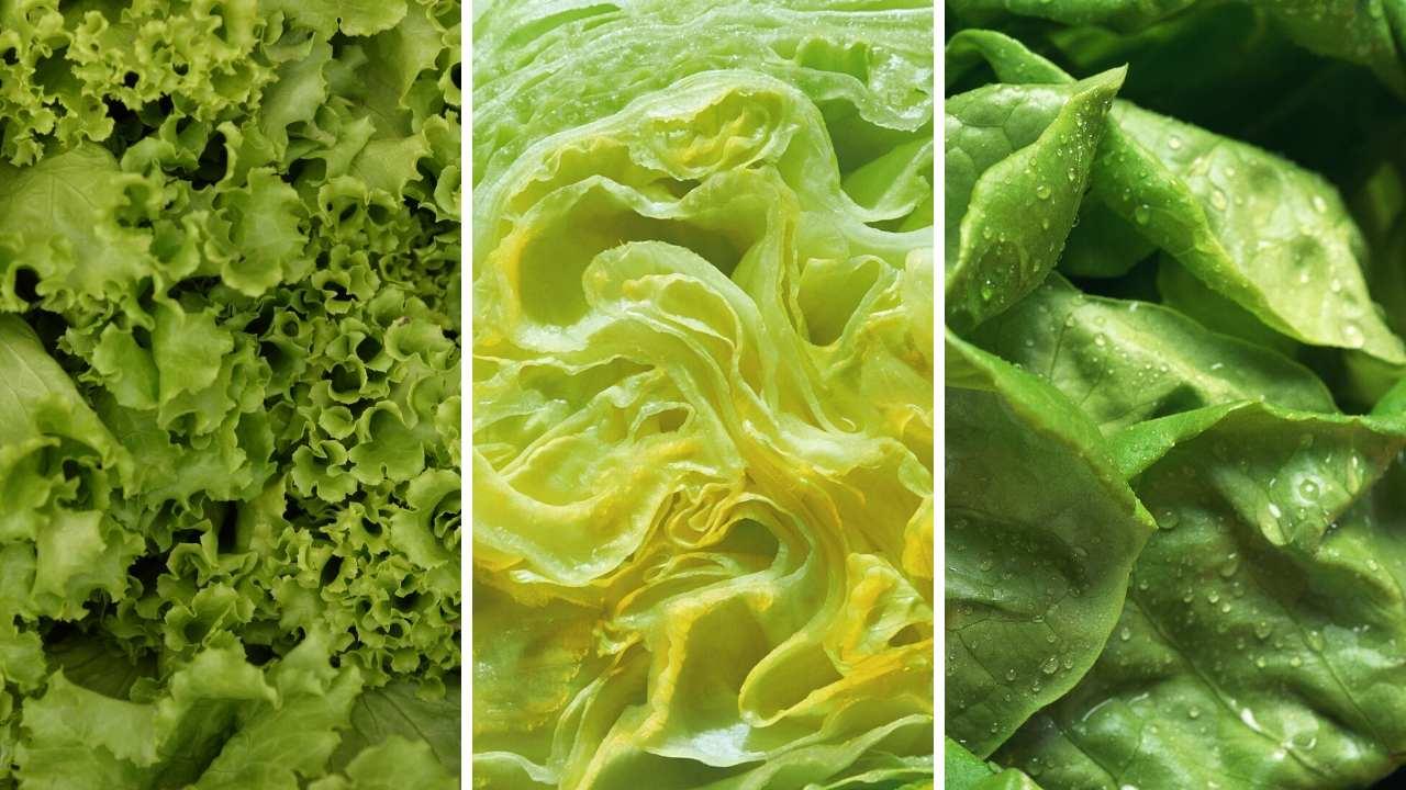 lettuce wraps lettuce types